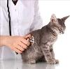 Ветеринарные клиники в Игнатовке